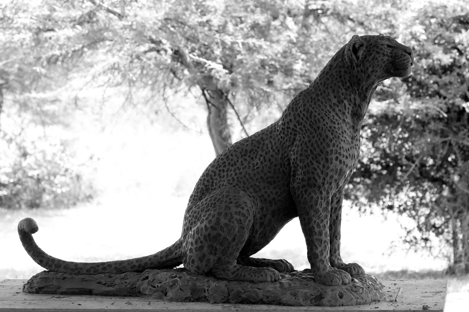 Aberdares Leopardess Sitting