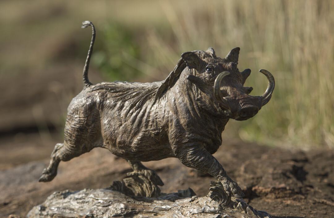 Aberdare Warthog Trotting