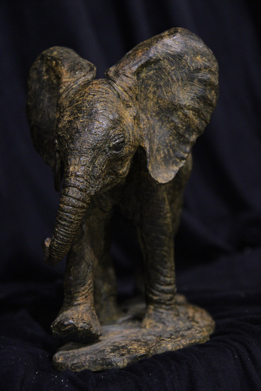 Baby Bull Elephant